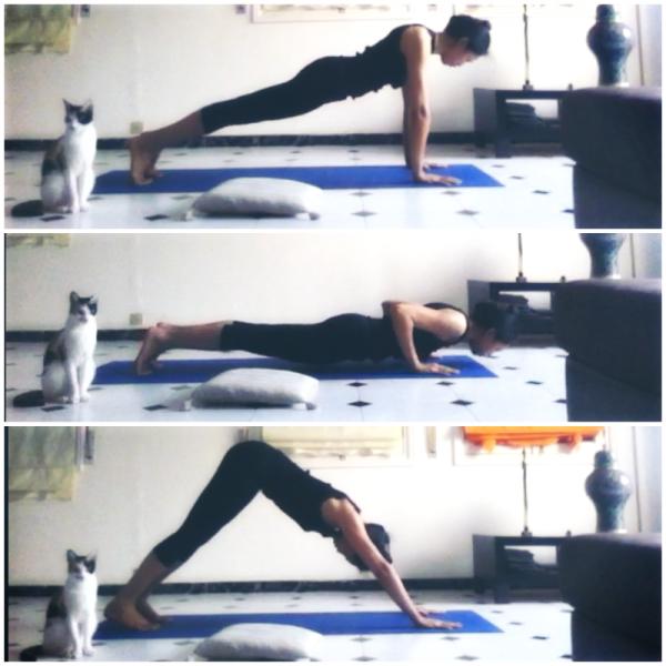 postures de yoga planche chien tête en bas adho mukha svanasana chat
